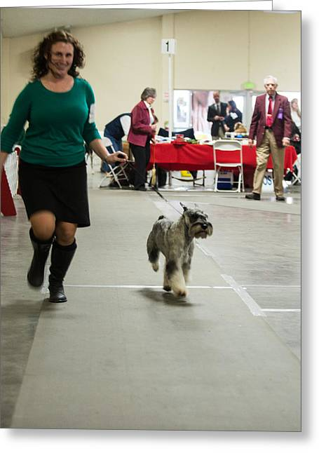 Standard Schnauzer Greeting Card by Dog Show Video
