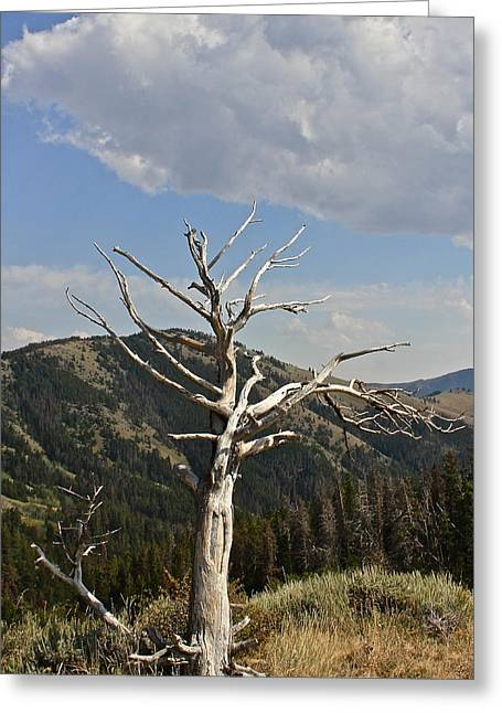 Greeting Card featuring the photograph Standing Alone by Kathleen Scanlan