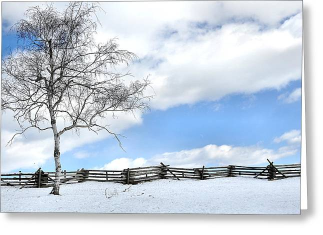 Standing Alone Greeting Card by Todd Hostetter