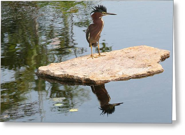 Standing Guard Greeting Card by Carol Kinkead