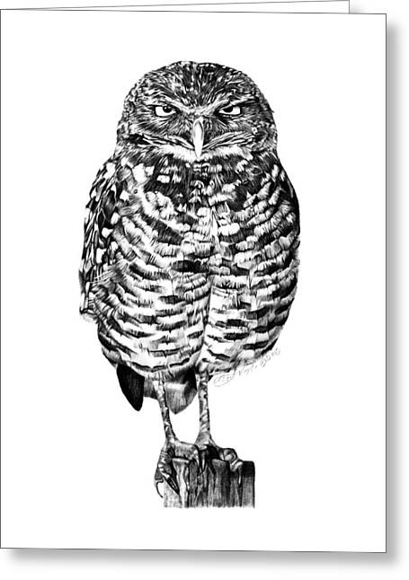 Greeting Card featuring the drawing 041 - Owl With Attitude by Abbey Noelle