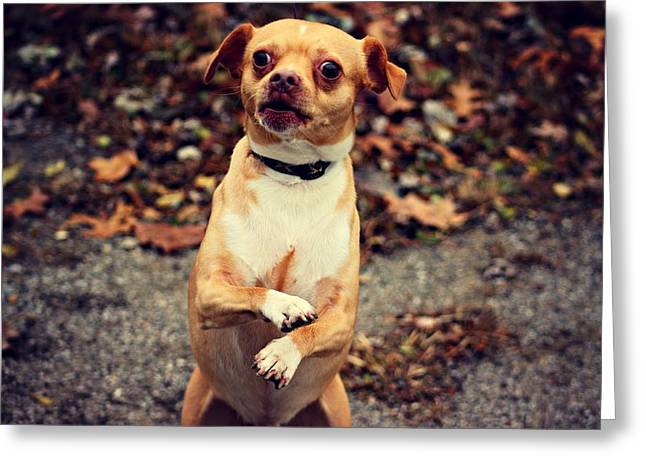 Standing Pup Greeting Card by Wilhemenia Williams