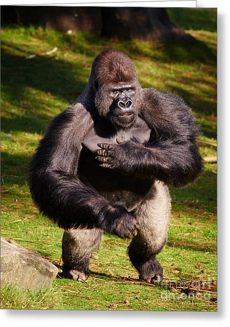 Standing Silverback Gorilla Greeting Card by Nick  Biemans