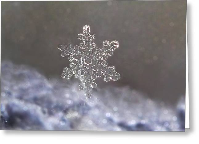 Greeting Card featuring the photograph Standing Snowflake by Lorella  Schoales
