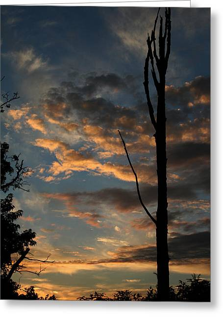 Standing Tall Among The Trees Greeting Card