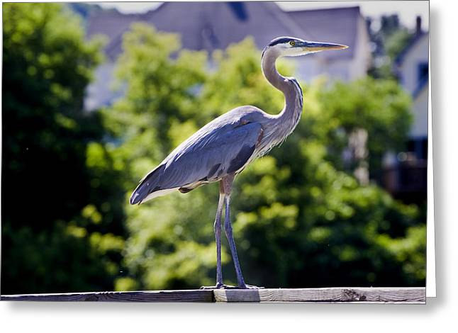 Standing Tall Greeting Card by David Simons