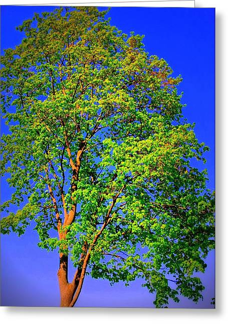 Standing Tall Greeting Card by Mary Beth Landis