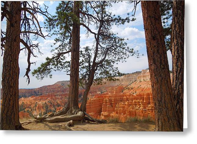Standing Tall On The Edge Of Bryce Canyon Greeting Card