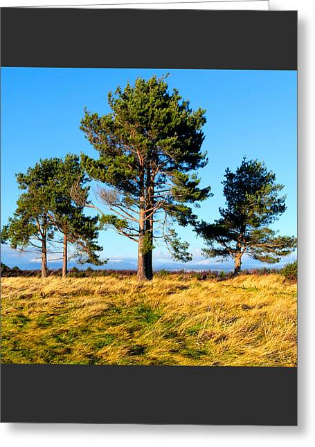 Standing Tall On The Fields Of Culloden Greeting Card