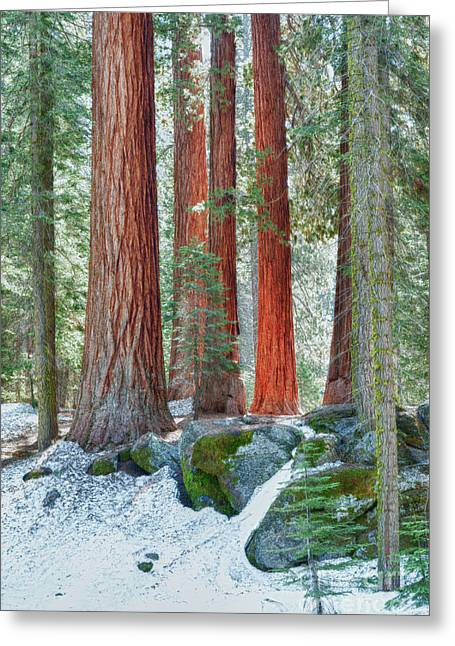 Standing Tall - Sequoia National Park Greeting Card by Sandra Bronstein