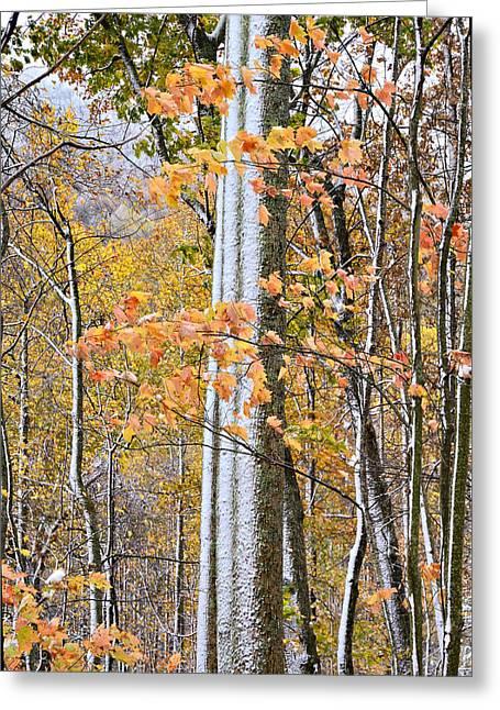 Standing Tall Greeting Card by Susan Leggett