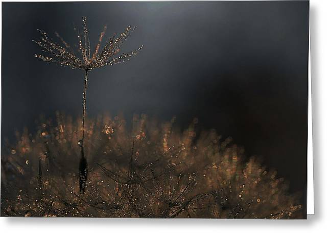 Standing Toward The Light... Greeting Card