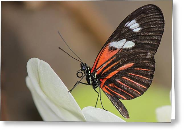 Standup Butterfly Greeting Card