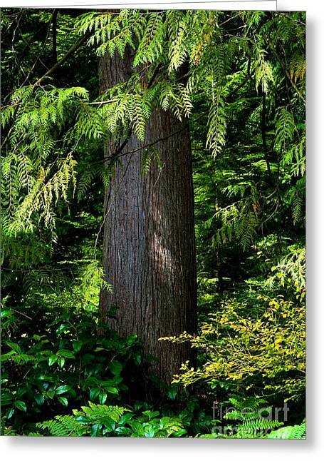 Stanley Park Trees 24 Greeting Card by Terry Elniski