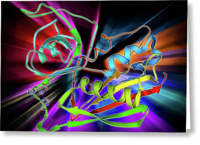 Staphylococcal Enterotoxin C2 Molecule Greeting Card by Laguna Design
