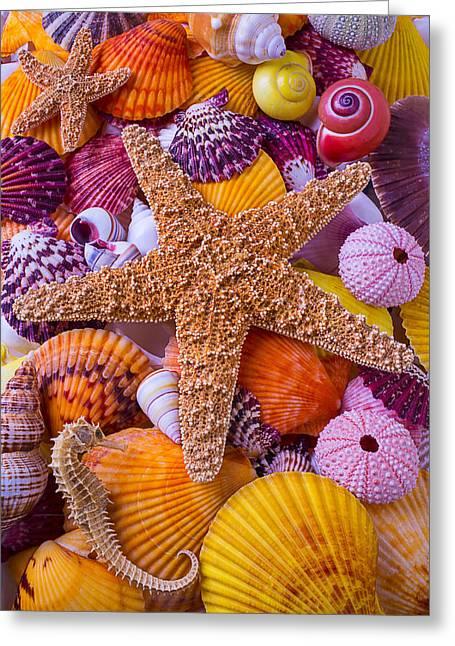 Star Among Sea Shells Greeting Card by Garry Gay