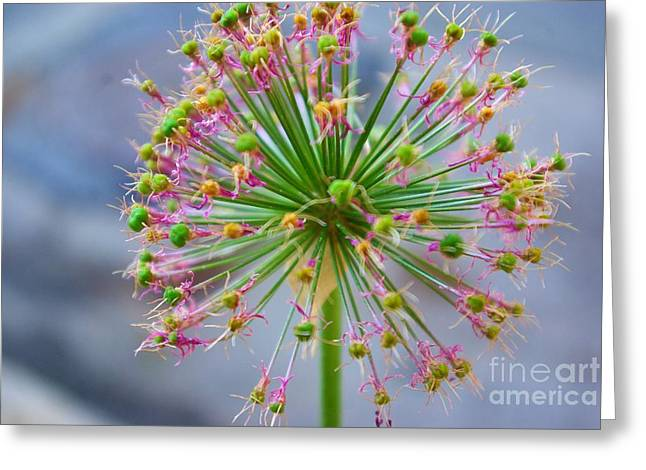 Greeting Card featuring the photograph Star Burst by John S