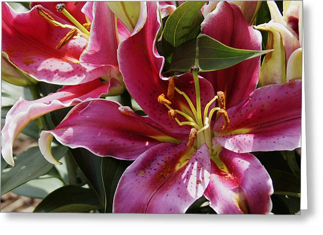 Greeting Card featuring the painting Star Burst Lily by Debra Crank
