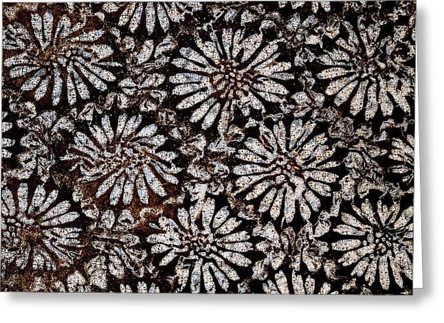 Star Coral In Thin Section Greeting Card by Dirk Wiersma