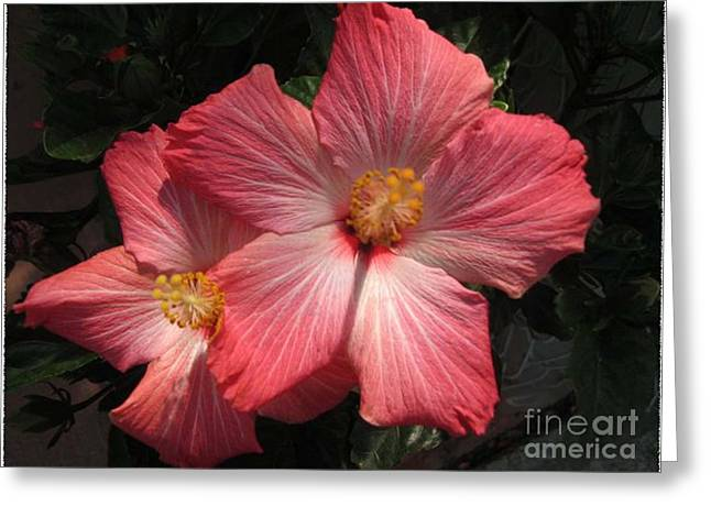 Star Flower Greeting Card by Barbara Griffin