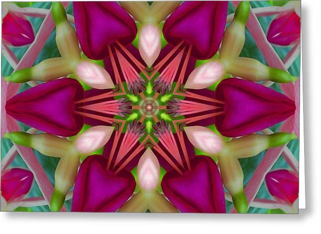 Star Fuchsia 2 Mandala Greeting Card