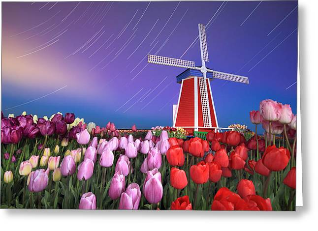 Greeting Card featuring the photograph Star Trails Windmill And Tulips by William Lee