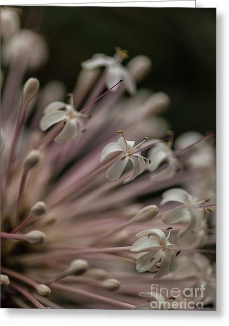 Starburst Flower Motion Greeting Card by Mike Reid