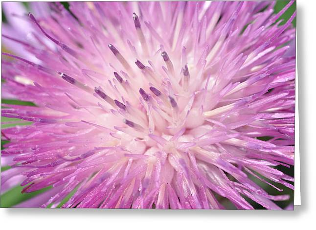 Greeting Card featuring the photograph Starburst by Sabine Edrissi