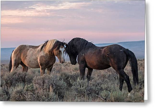 Stare Down Greeting Card by Sandy Sisti