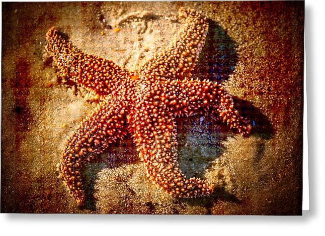 Starfish 3 Greeting Card by Kathleen Scanlan