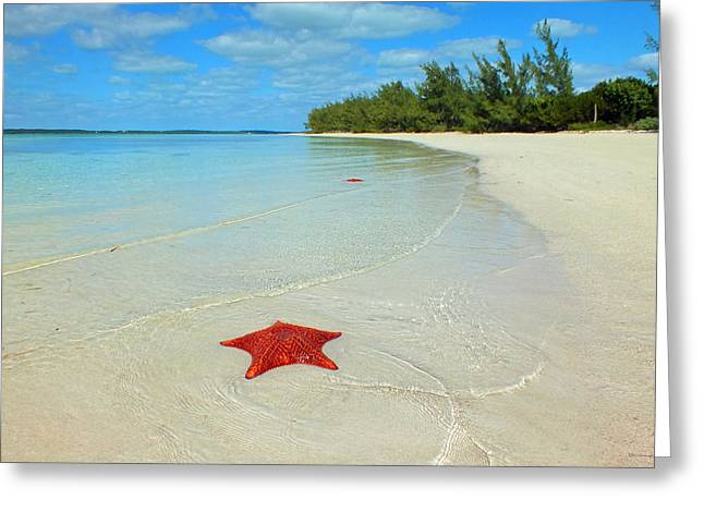 Starfish 5 Of Bottom Harbour Sound Greeting Card