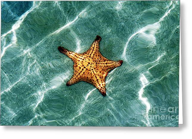 Starfish At Star Beach Greeting Card by John Rizzuto