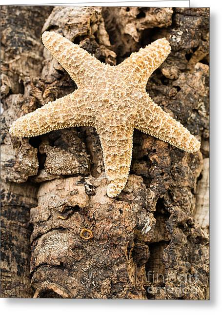 Starfish Greeting Card by Edward Fielding