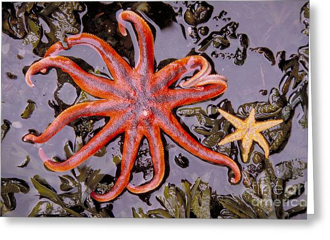 Starfish In Tidal Pool Greeting Card by Mark Newman