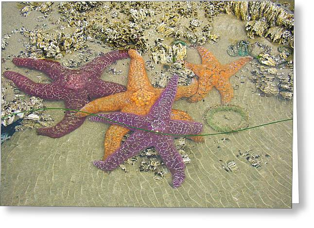 Starfish Love-oregon Coast Greeting Card