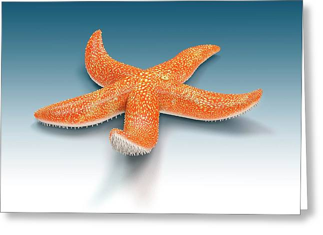 Starfish Greeting Card by Mikkel Juul Jensen