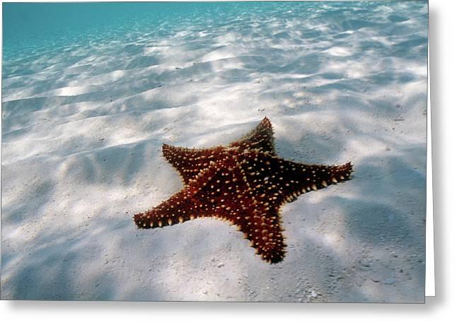 Starfish On Beach Greeting Card