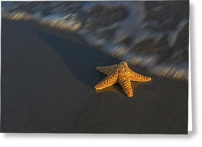 Starfish On The Beach Greeting Card by Susan Candelario