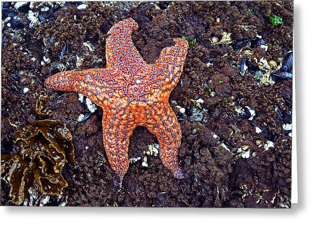 Starfish - Oregon Coastline Greeting Card