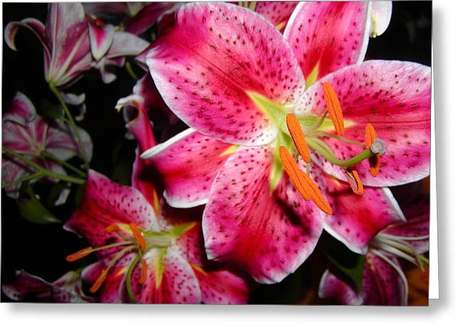 Stargazer Lilies At Night Greeting Card