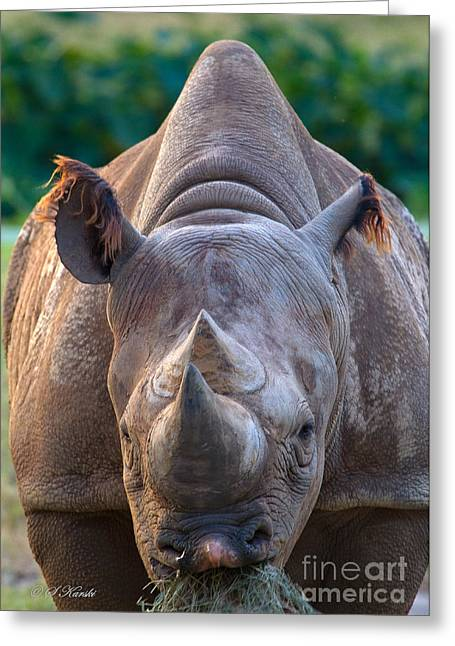 Staring Down Rhino Greeting Card