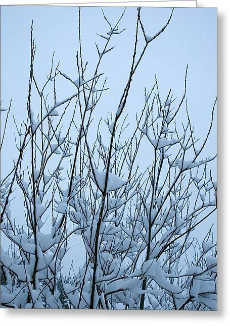 Stark Beauty - Snow On Branches Greeting Card by Denise Beverly