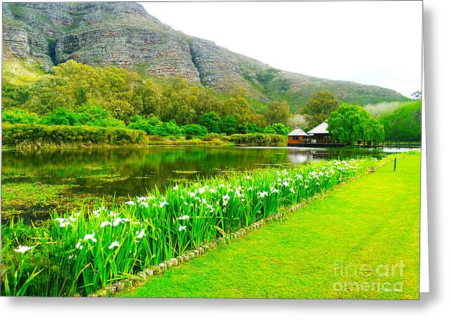 Stark Conde Wine Estate Stellenbosch South Africa 3 Greeting Card
