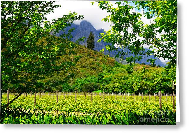 Stark Conde Wine Estate Stellenbosch South Africa 4 Greeting Card