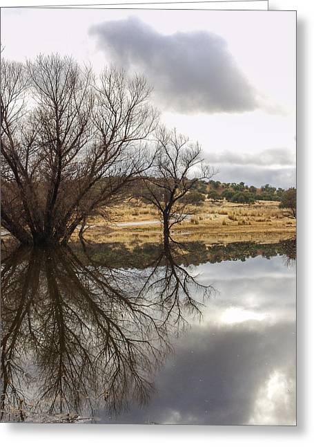 Stark Reflections Greeting Card by Beverly Parks