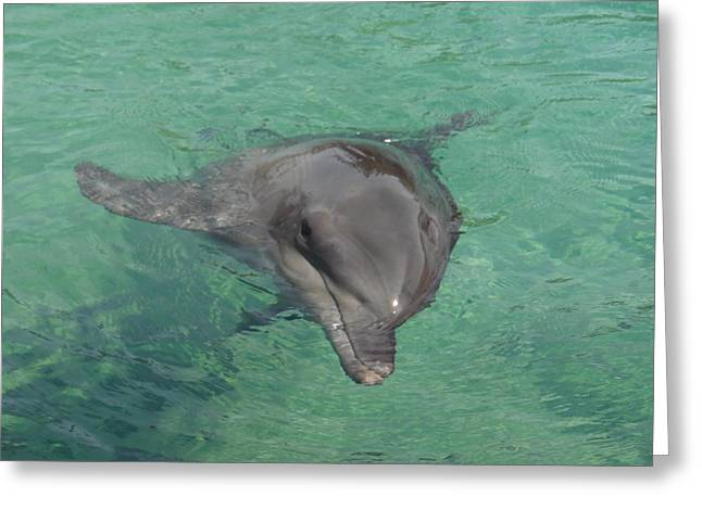 Starlett Dolphin  Greeting Card by Mary J Tait