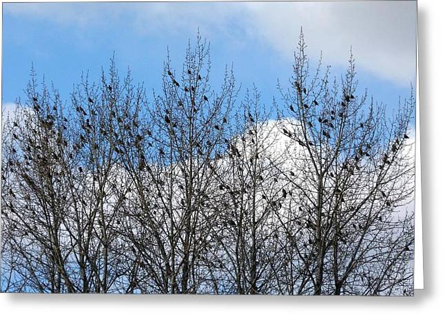 Starlings In The Cottonwoods Greeting Card by Will Borden