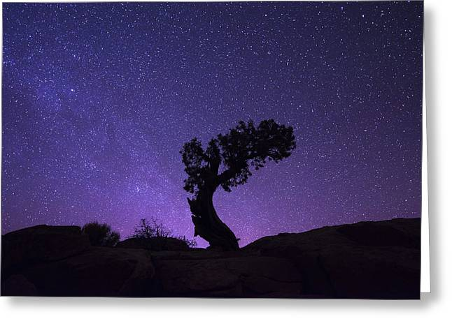 The Dreaming Tree Greeting Card by Dustin  LeFevre