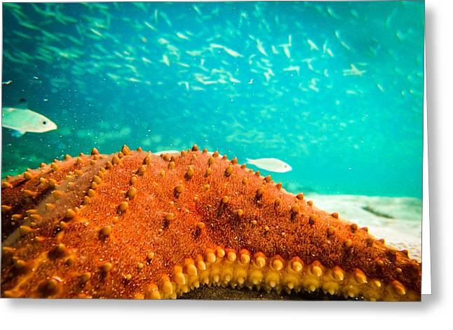Stars And Fish And Starfish Greeting Card