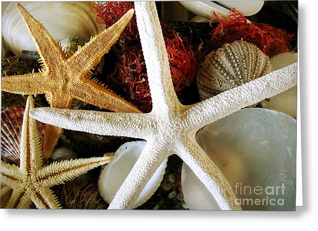 Stars Of The Sea Greeting Card by Colleen Kammerer